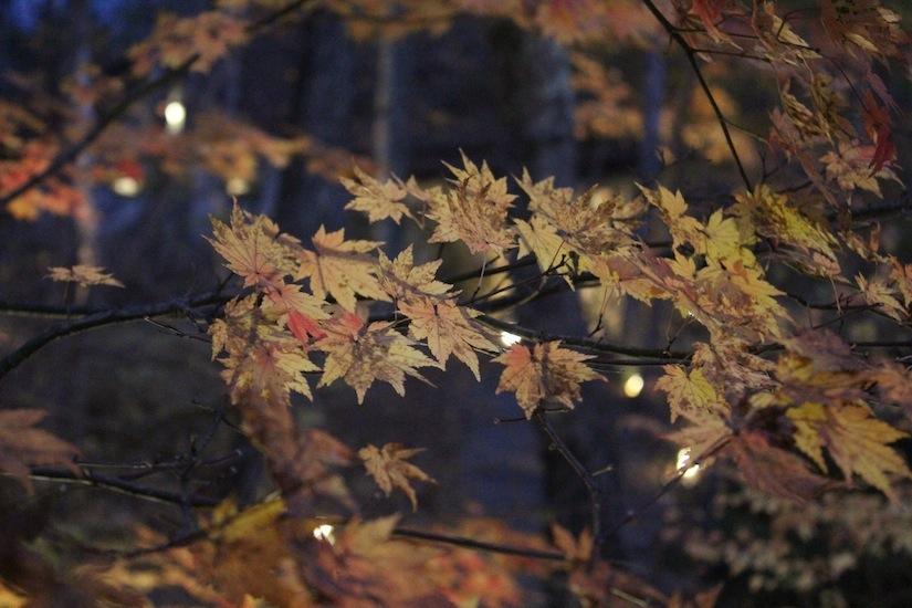 秋の八ヶ岳倶楽部5